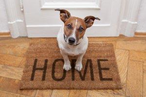 Hund vor Haustüre